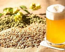 Loja de insumos para cerveja sp