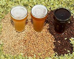 Insumos para cerveja sp