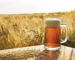 Insumos para cerveja